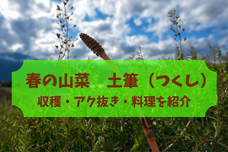 春の山菜土筆(つくし)の収穫方法・アク抜き・料理を分かりやすく紹介!