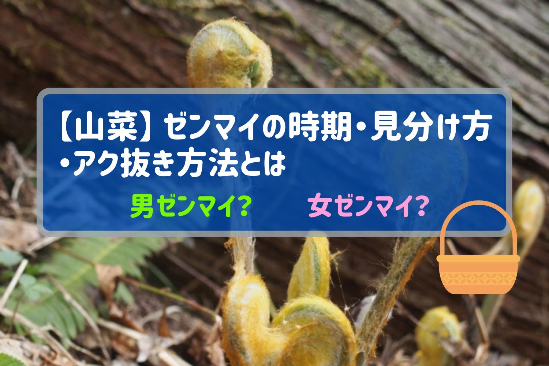 【山菜】-ゼンマイの時期・見分け方・アク抜き方法とは?